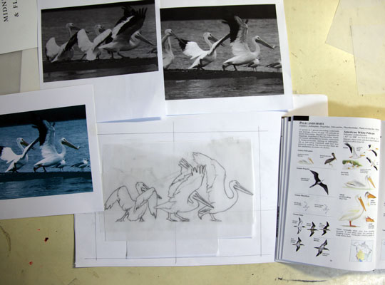 Preliminary drawing for a wood engraving of pelicans prepairing for lift off.