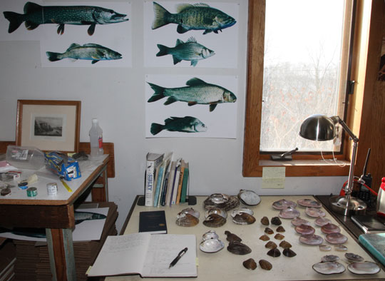 22 pairs of mussel shells and photographs of 6 fish.